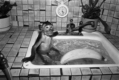 Robin Schwartz's Primate Photography example