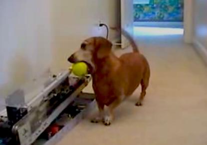 dog returning ball to robot ballthrower