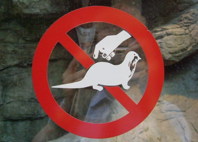 international for dont touch the weasel - photo